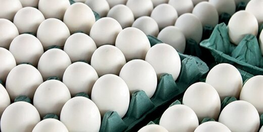 قیمت تخم مرغ رسما افزایش پیدا کرد