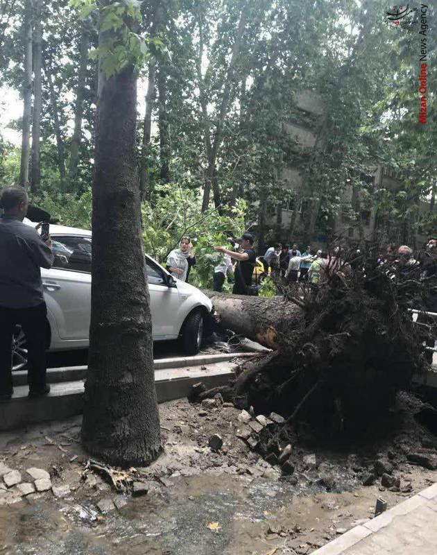 خسارت باد شدید در تهران! +عکس