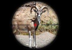 دستگیری شکارچی در لارستان