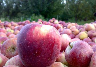 ۹۰۰ تن سیب تنظیم بازاری دولت در انبارها خراب شد