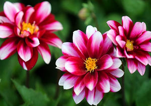 گل و گیاهی که از چاقی جلوگیری میکنند