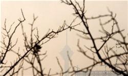 تشکیل کمیته اضطراری آلودگی هوا