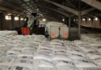 واردات برنج افزایش یافت