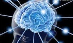 محافظت سینوسها از مغز در برابر ضربه