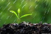 روایتی جالب از عکس العمل امام علی(ع) در هنگام بارش باران