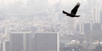 شاخص آلودگی تهران طی روز جاری /هوا خنکتر میشود