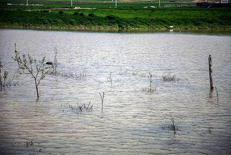 بارش شدید باران به شمال کشور رسید