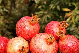 ارزانترین و گرانترین میوه های پاییزی