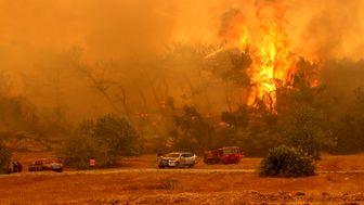 ادامه آتش سوزی در جنگلهای ترکیه