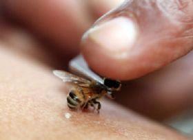 این افراد نباید زنبور درمانی کنند
