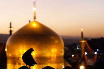 امسال چند هزار نفر پیاده به مشهد رفتند؟