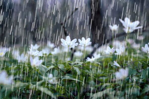 آیا بارش باران ادامه خواهد داشت؟