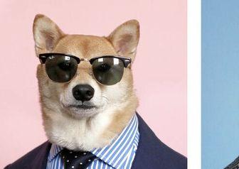 سگی که مدل است!/ عکس