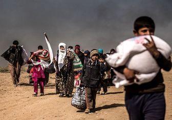وقتی داعش، زنان را مجبور به بریدن سَر میکند