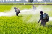 تولید بذر عاری از عوامل بیماریزا با تاسیس مرکز نوآوری گیاهپزشکی