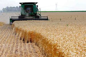 کاهش جهانی قیمت گندم و ذرت