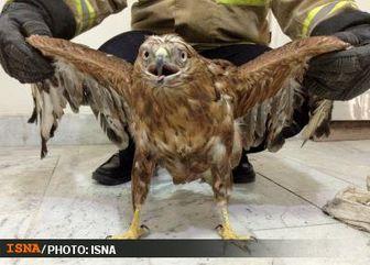 پرواز عقاب عظیمالجثه در آسمان جنوب پایتخت