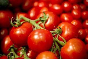 کامیونهای حامل گوجه فرنگی قاچاق متوقف شد