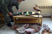 کشف گوشت گراز ،لاشه اردک وحشی، غاز وحشی،کبک در زنجان