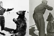 ماجرای خرس مشهور ایرانی که به سربازی رفت! + عکس