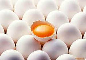 دلایل افزایش قیمت تخممرغ در بازار