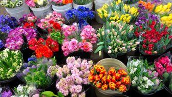 رونق اینترنتی بازار گل و گیاه