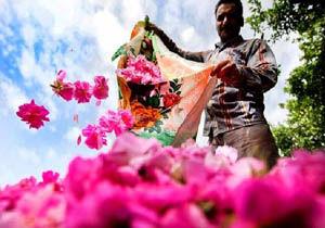استشمام بوی گلاب در ساری