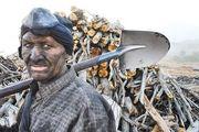 آشفته بازار زغال در کشور که جنگل را به کام مرگ میکشد
