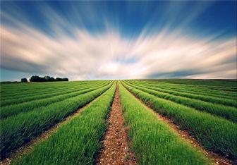 توصیههای هواشناسی کشاورزی برای روزهای آینده منتشر شد