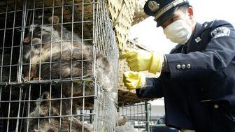 تجارت و خوردن گوشت حیوانات وحشی در چین ممنوع شد