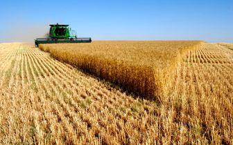 خشکسالی گریبانگیر کشاورزان آلمان