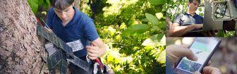 هوش مصنوعی و گوشیهای قدیمی هوآوی به کمک جنگلها میآیند
