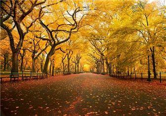افزایش بروز اگزما و سکته مغزی در پاییز