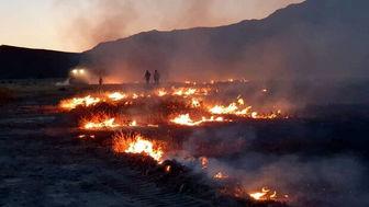 پشت پرده آتش سوزی های اخیر در پارکهای تهران