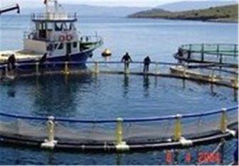 ۳ طرح پرورش ماهی در قفس در آبهای خلیج فارس بوشهر اجرا میشود