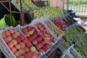 رسیدن میوههای نوبر پاییز به بازار