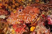 استتار خارقالعاده حیوانات در طبیعت/ گزارش تصویری