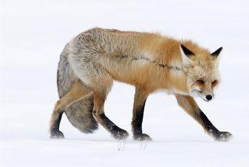 برندگان عکاسی حیات وحش ۲۰۲۰/گزارش تصویری