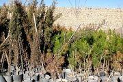آغاز عملیات آماده سازی بستر و حفر گودال جهت غرس تعداد 1100 درخت چنار