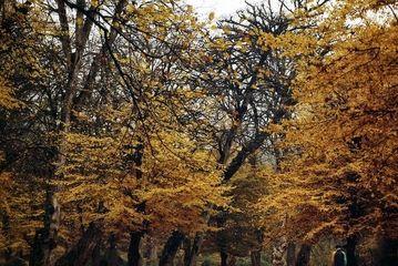 پاییز هزار رنگ گلستان/ گزارش تصویری