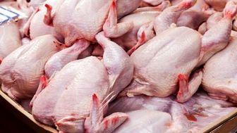 تنظیم بازار مرغ با عرضه ۱۴۰۰ تُن مرغ گرم در تهران از امروز