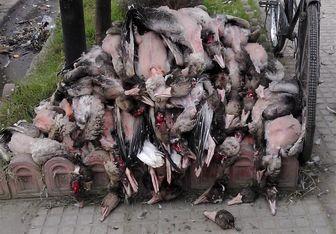 سیدمهدی طباطبایی: کشتار پرندگان مهاجر حرام است