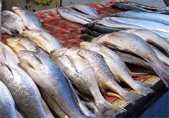 عامل اصلی گرانی ماهی در بازار