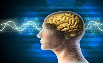 کدام خوراکیها برای بیماریهای مغز و اعصاب مناسب است؟