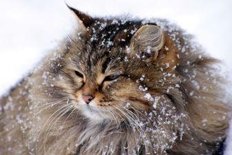 اطلاعیه سازمان محیط زیست استان تهران در پی بارش برف