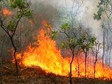 آتشسوزی جنگلهای آستارا مهار شد