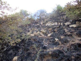 3 هکتار از جنگلهای باغات در آتش سوخت