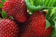 تب داغ قیمت میوه های تابستانه در بازار