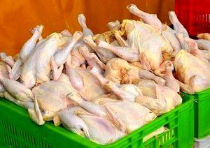 افزایش نرخ مرغ ادامه دارد