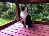 گربه کانادایی برای شهردار شدن، کاندیدا شد